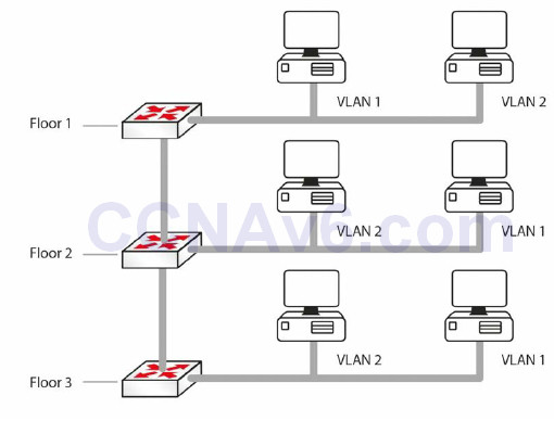 Section 2 – CSMA/CD, Switching, and VLANs 42