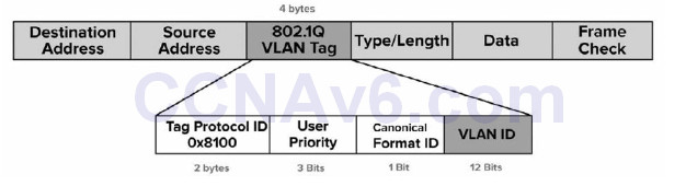 Section 2 – CSMA/CD, Switching, and VLANs 44