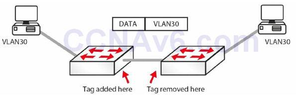 Section 2 – CSMA/CD, Switching, and VLANs 45