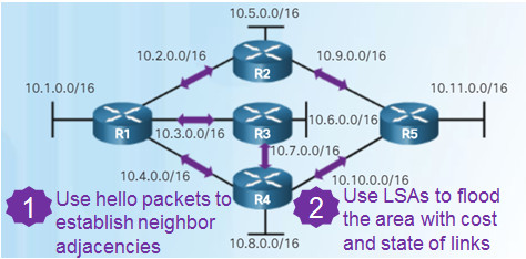 Scaling Networks v6.0 Instructor Materials – Chapter 8: Single-Area OSPF 92