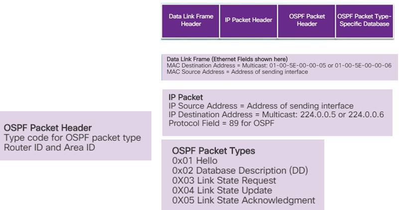 Scaling Networks v6.0 Instructor Materials – Chapter 8: Single-Area OSPF 97