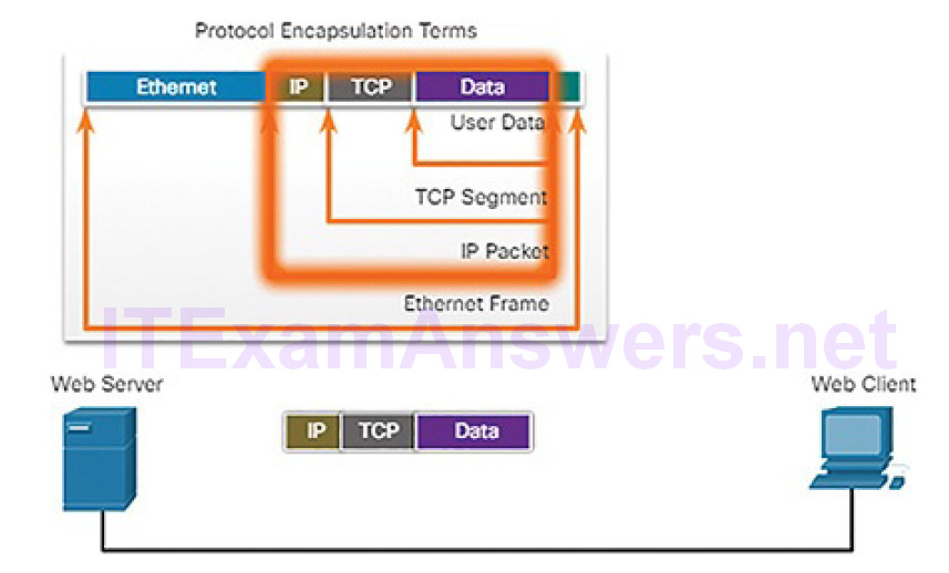 CCNA Cyber Ops (Version 1.1) – Chapter 4: Network Protocols and Services 164