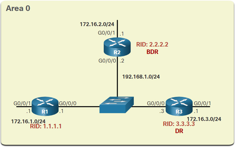 CCNA 3 v7.0 Curriculum: Module 2 - Single-Area OSPFv2 Configuration 32